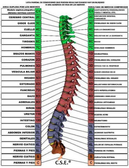 Los ejercicios pirm para el departamento de pecho de la columna vertebral