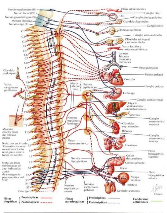 columna vertebral | El Blog de Camilo Acosta