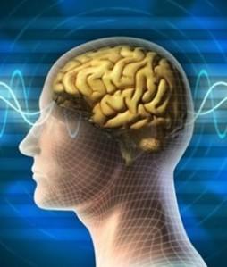 Cerebro 02
