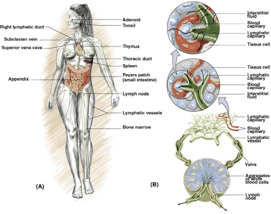 Limpiar los desagües de su cuerpo: Cómo desintoxicar su sistema ...