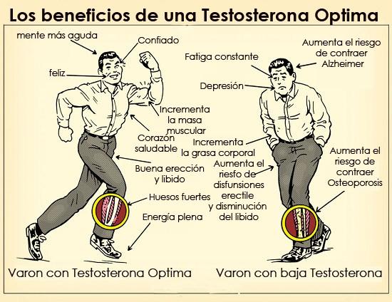 que hace la testosterona