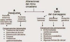 alteraciones ritmo circadiano