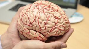 cerebroII