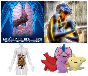 organos del cuerpo