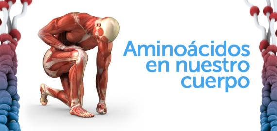 aminoacidos-en-nuestro-cuerpo