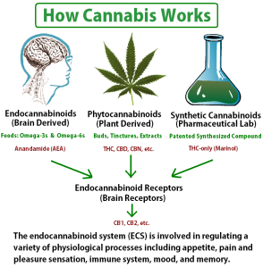 how-cannabis-works
