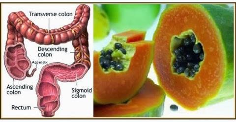 intestino_papaya