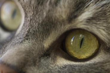 ojo-de-los-gatos